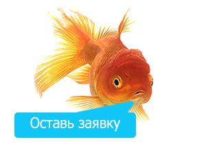 1276841461_animal7 copy