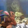Зачем нужен аквариум дома ?